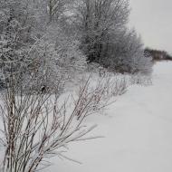 Зима. 2019 год